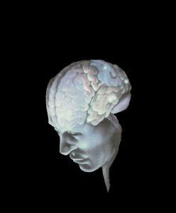 мы начинаем проникать в извечную тайну, связанную с понятием «мышление» или «разум». Однако ни одну из «мыслительных» операций, которую мы приписываем «разуму», до сих пор не удалось прямо связать с какой-то специфической частью мозга