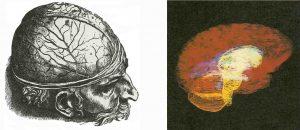 Представления об организме и мозге менялись, по мере того как ученые овладевали новыми методами исследования