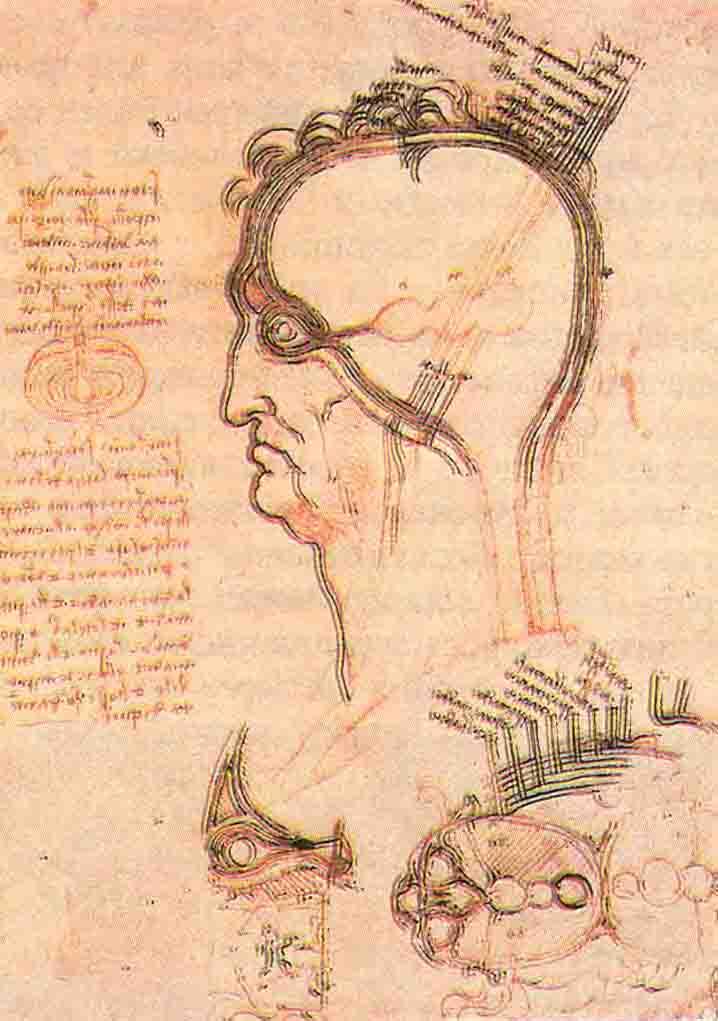 В этих набросках Леонардо придерживается средневекового представления о сферических желудочках, передний из которых он называет «камерой здравого смысла», где располагается душа