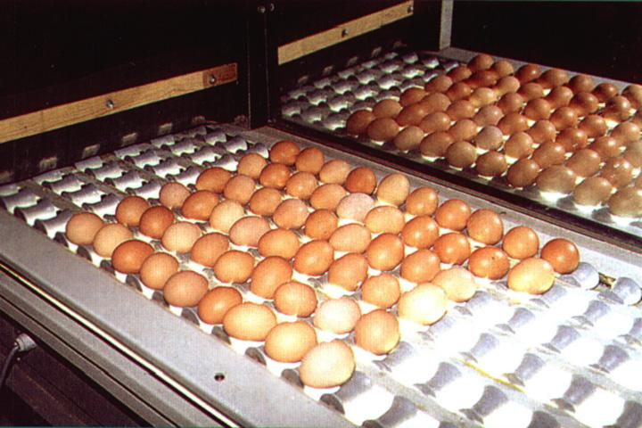 Контроль за качеством предназначенных для инкубации яиц